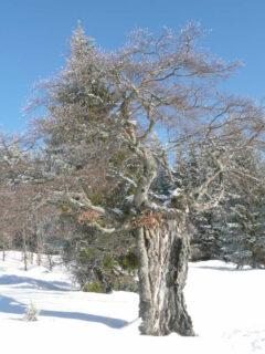Typischer Schachtenbaum