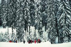 Kleine Menschen unter hohen Bäumen