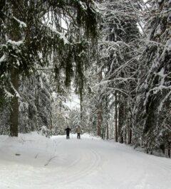 Winterromantik: Wald-Loipe