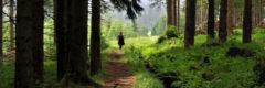 Uralte Wege führen durch die Wälder des Böhmischen Erzgebirges