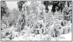 Schnee-Kobolde