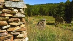 Die Ruinen der Königsmühle: Magie der Geschichte