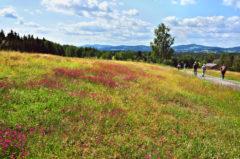 Wandern vom Rosenbergergut nach Breitenberg