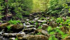 Waldkirchen Wunderbares Wandern an der Saußbachklamm
