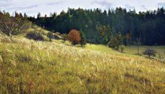 """Der Mährische Karst ist die Heimat das """"Schlauen Füchsleins"""". Im Herbst ist diese Landschaft besonders zauberhaft."""