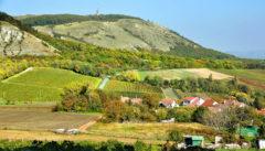 Die Pálava: ein zauberhaftes Wander- und Weingebiet.