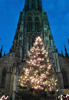 Christbaum am Ulmer Münster