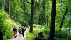 Wir wandern auf der alten Egerpromenade von Loket nach Karlsbad