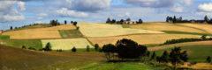 Die Kaschubei: ein Flickenteppich aus bunten Feldern und Wiesen