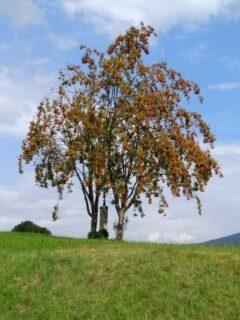 Lamer Wiese, Baum und Marterl