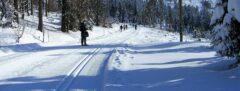 Die Bretterschachten-Loipe auf über 1100 m Höhe wird täglich mehrfach Maschinen-gespurt & hat die urige Chamer Hütte als Ziel (9 km)