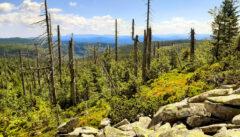 Blick vom Lusen in den Böhmerwald