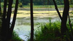 Die junge Oder. Eine Wasserwelt ohnegleichen