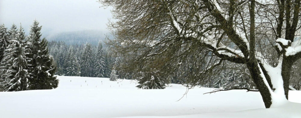 Einsames tschechisches Grenzland: Der Schnee verwischt die letzten Grenzen