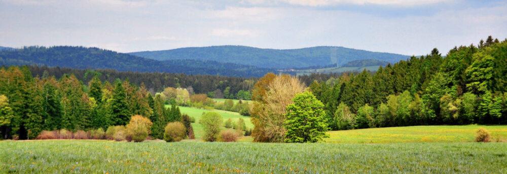 Sommerliche Vorwald-Landschaft