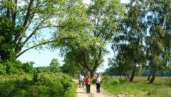 Wandern in der pommerschen Boddenlandschaft ist eine beschauliche Meditation