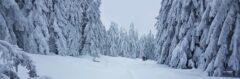 Am Weg zum Pürstling: tief verschneiter Wald - mit Glück auch in diesem Jahr