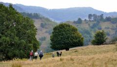 Eindrucksvolle Baumlandschaft auf der Wanderung nach Malmkrog