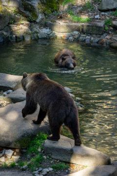 Bären im Krumauer Schlossgraben