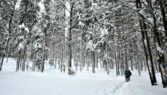 Den Weg zum Teufelssee durch die tiefen Wälder des Künischen Gebirges muss man sich selber spuren
