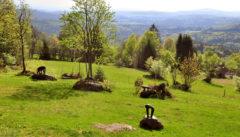 Der Skulpturenpark von Heinz Theuerjahr in Waldhäuser