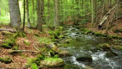 Die kleine Ohe umfließt Waldhäuser