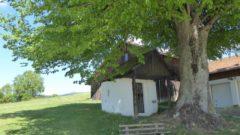 Alte Kapelle bei Grafenwiesen unter mächtiger Linde