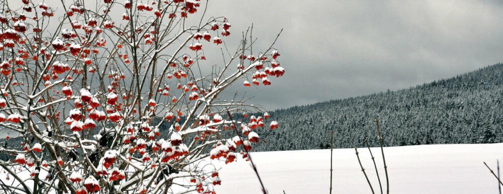 Über Eisenstein: Der Winter als Farbspektakel