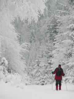 In Schneemassen